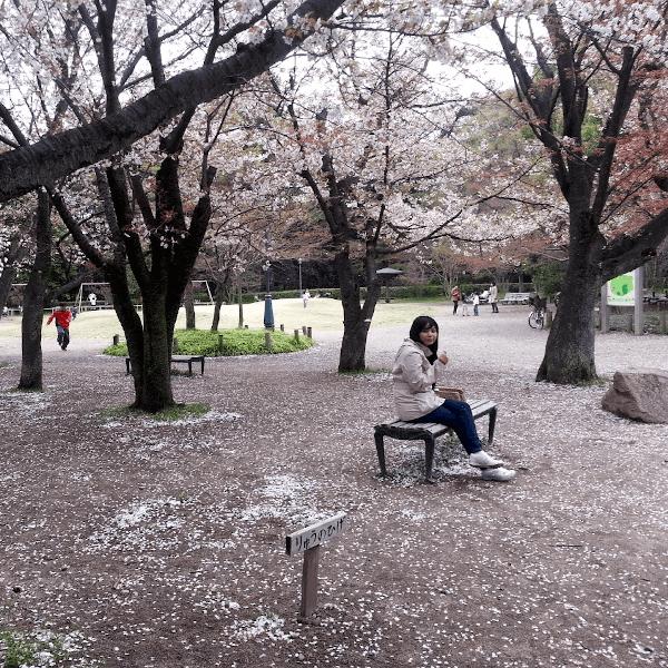 2017: a return to kyoto